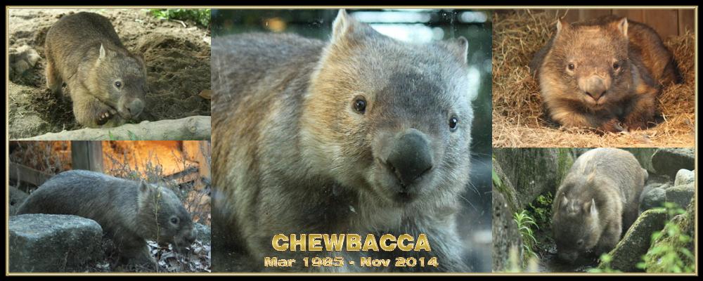 Chewbacca Memorial