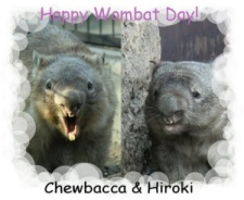 Happy Wombat Day Picture by Chieko
