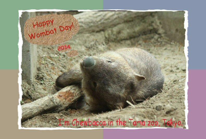 Wombat Day 2014 by Chieko